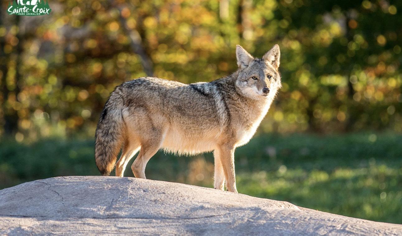 Séminaire entreprise / Parc animalier / Parc naturel / animaux sauvages